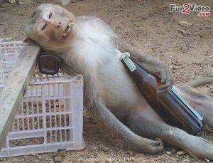 drunken-monkeys-funny